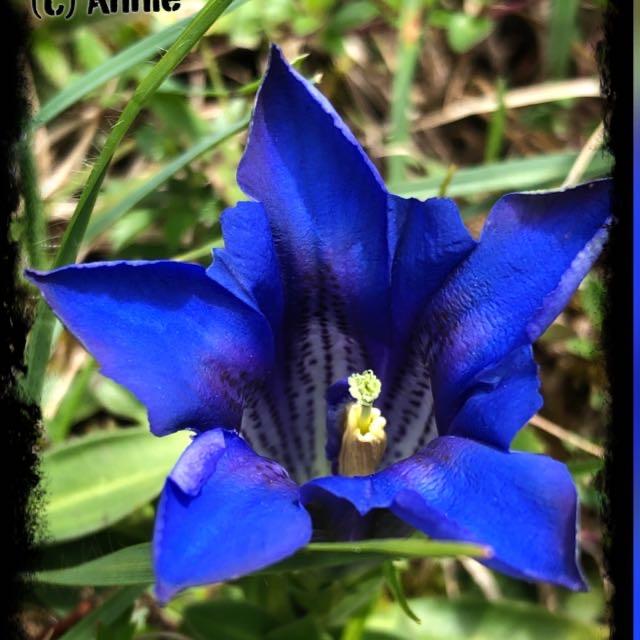 52 – Die Foto-Reise Woche 8/52 - 44 blau
